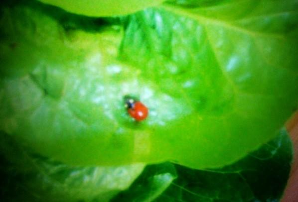 My Ladybug Friend