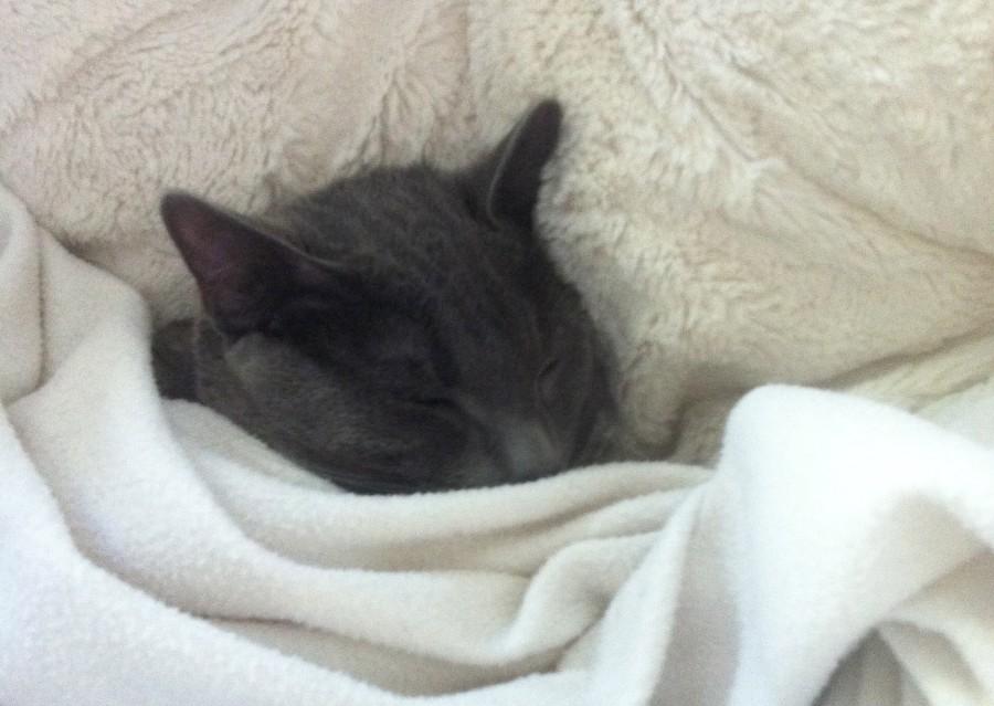 George Sleeping